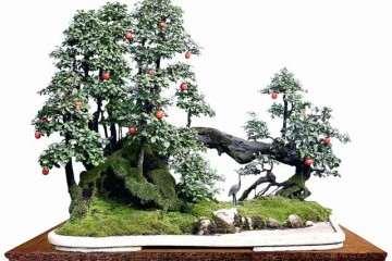 永川举行首届中国金弹子盆景全国邀请展