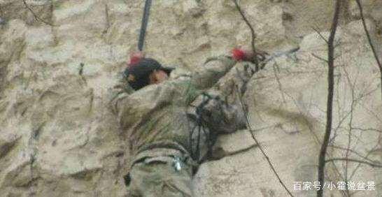 挖掘崖柏下山桩的全过程