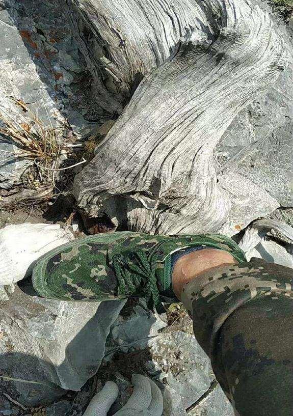 在山里发现一棵快要枯死的崖柏下山桩