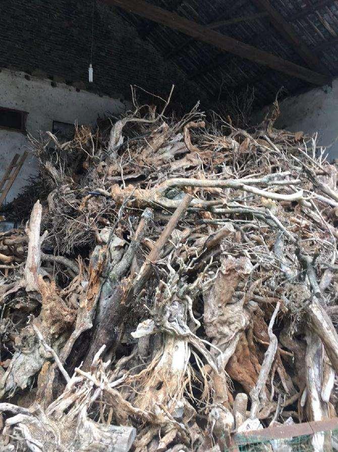 云南男子40吨黄杨下山桩 估计要坐牢10年