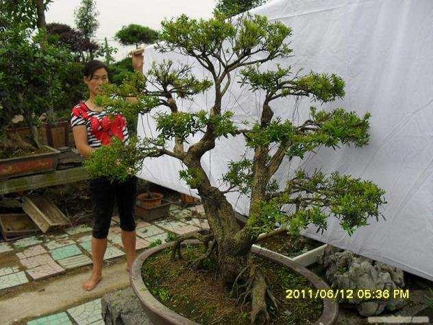 榆树下山桩种养的五个环节