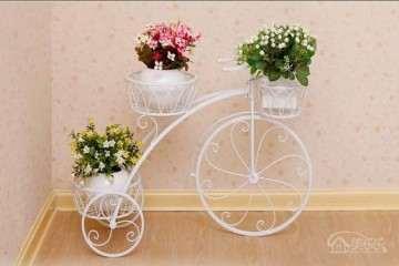 家里风水盆栽植物有哪些 图片