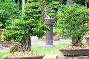 温度对盆景植物生长的影响