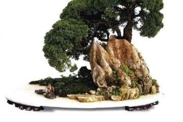 盆景造型中怎么使用藏露的方法 图片
