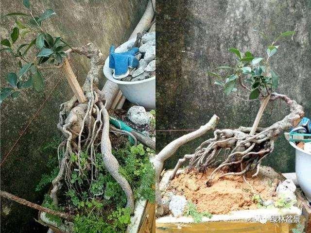 下山桩的根部怎么造型设计
