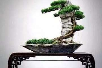 怎么制作岭南附石盆景的方法 图片