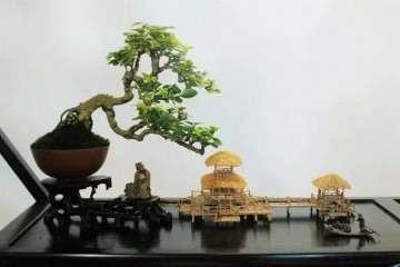 盆景的原形都最早出现在东的河北省境内