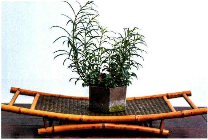 山野草趣展览在上海植物园盆景园内拉开帷幕