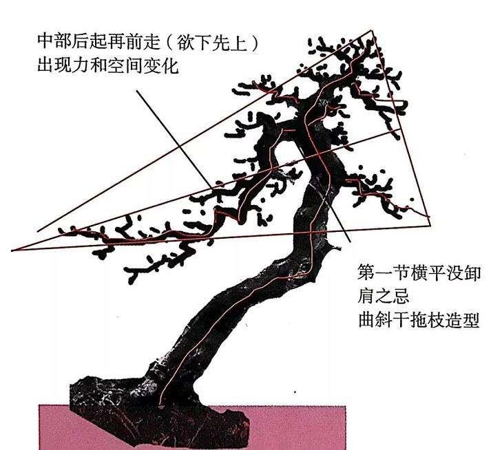 山橘盆景怎样造型设计的方法