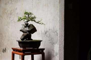 怎么在室内做好盆景与红木家具的搭配