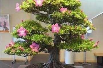 盆景的枝干和树干怎么处理的方法