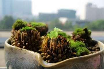 家里苔藓盆景需要注意哪些事项