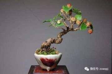 果树盆景枝怎么造型形式及技法
