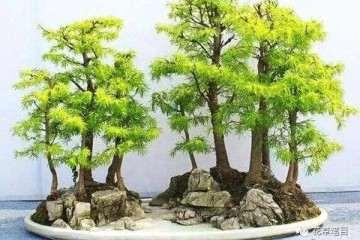 丛林式盆景你了解多少 该如何制作?