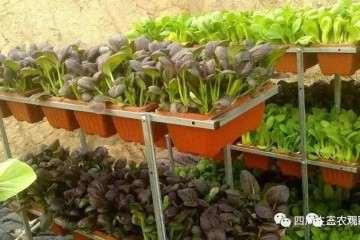 黄杨盆景带土小苗的栽培方法