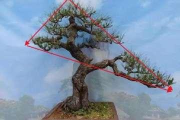 双干盆景怎么造型设计的要领 图片