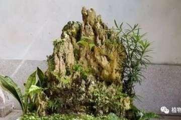 山水盆景怎么制作与摆放技巧