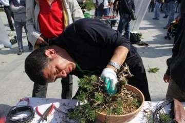 上海植物园开启储备盆景的瑰宝