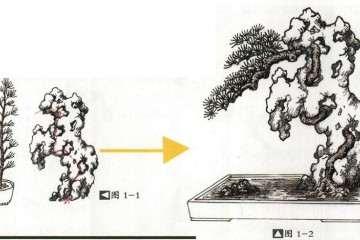 图解 附石盆景怎么制作的方法详