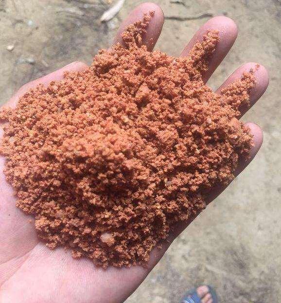 映山红下山桩用黄土种植怎么样