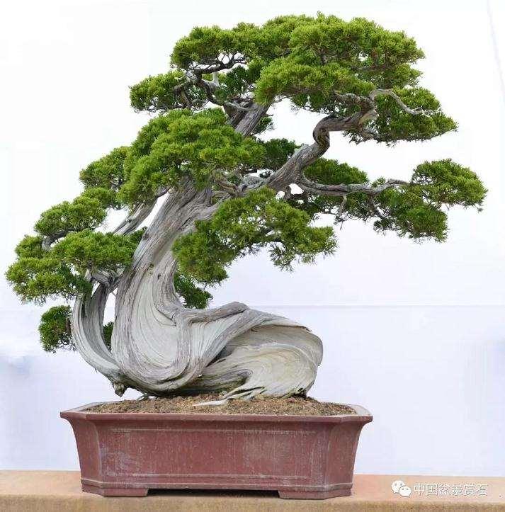 鸿江盆景植物园向社会大众开放啦