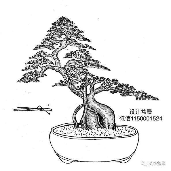 树桩盆景设计构图友什么意义