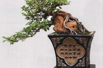 附石盆景的出现是在我国的南宋时期