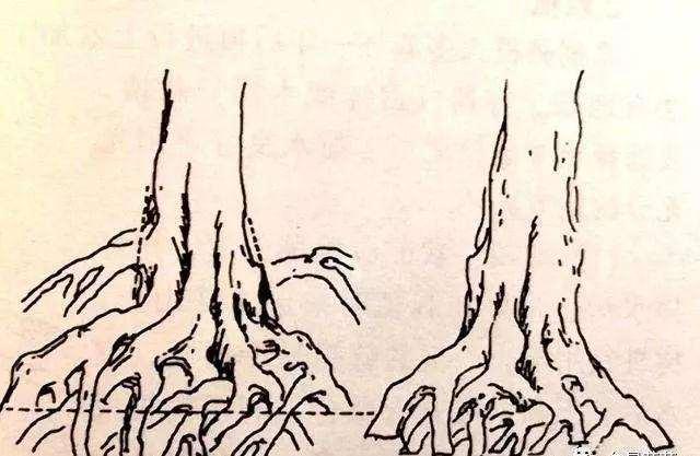 树桩盆景怎么处理根部的方法