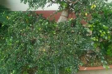 榆树盆景能在山东室外过冬吗