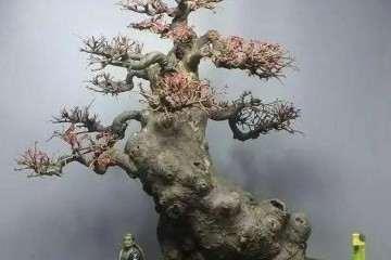 榆树老桩盆景怎么制作的方法