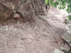 这土壤可以用来种雀梅下山桩吗