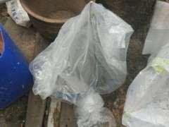 下山桩生桩套袋后要多少天喷水或者浇水