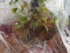 榆树下山桩生桩一般什么时候会发芽啊