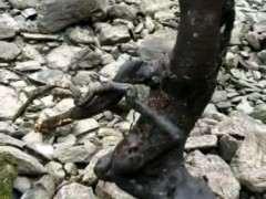 纯河沙种下山桩生桩 多久浇下水