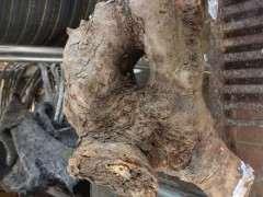 榆林下山桩生桩根部能用封口胶吗