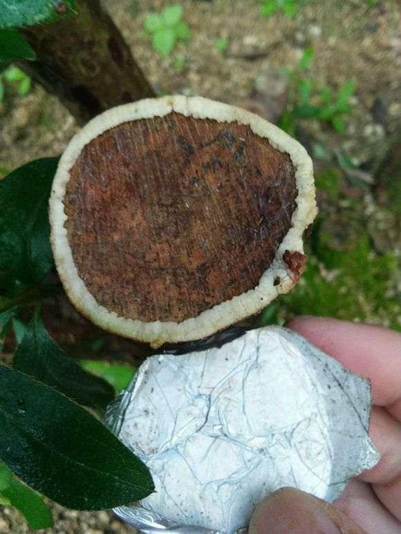 怎么处理下山桩树桩伤口愈合的方法