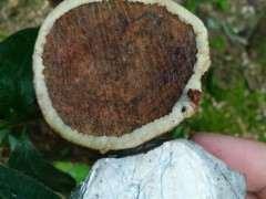 砍过的林地只剩下树桩下山桩怎么处理