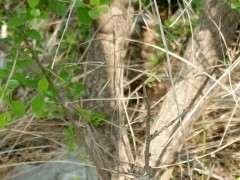 山东的老乡们看看这是什么下山桩树桩
