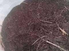 松树下山桩腐叶土栽绿萝行吗 图片