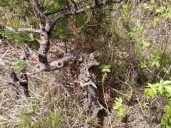 松树下山桩下面掉的松树皮可以种兰草吗