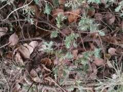 小区绿化带的松树下山桩 什么时候挖最好