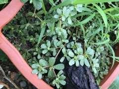 松树下山桩用什么土壤栽好成活