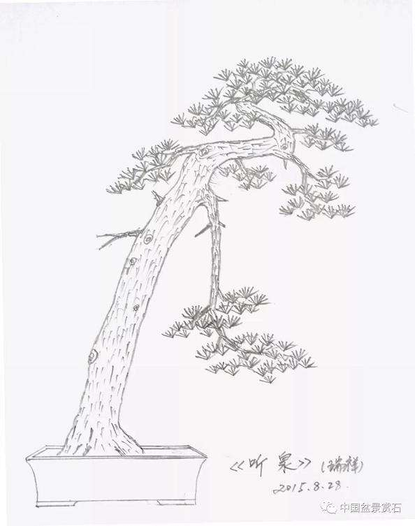 五针松下山桩怎么制作成盆景的方法