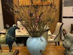 野生杜鹃下山桩冒似枯枝 插花瓶开花