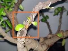 榕树下山桩这种季节能换盆吗 4-5度