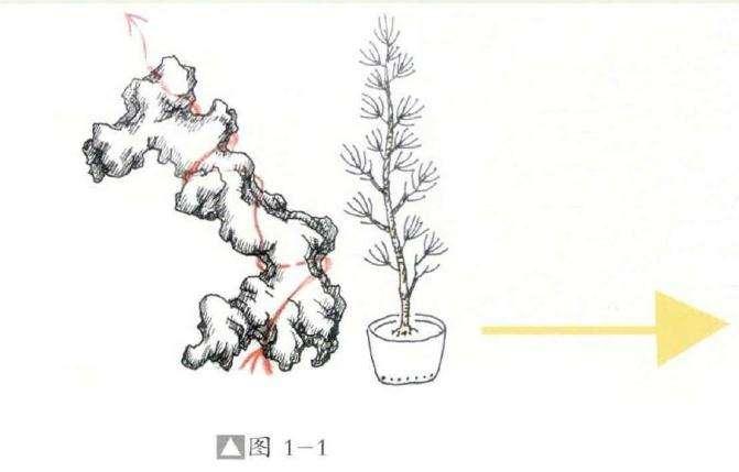 附石盆景怎么制作设计的方法 图片