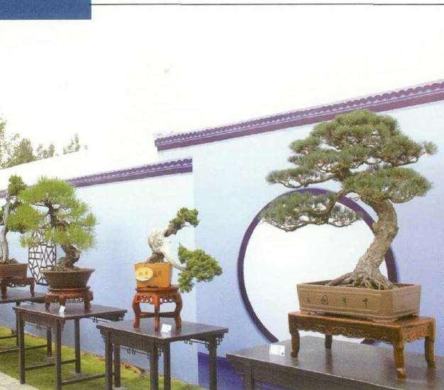 临沂市首届盆景艺术节
