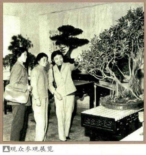 1979年 北京首届盆景展 图片