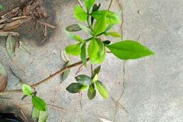 湖南山上有哪些植物适合做盆景 图片