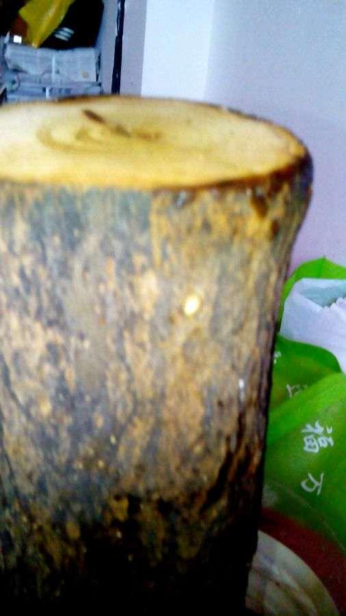 石榴下山桩刚收到 先泡水24小时 再加生根粉